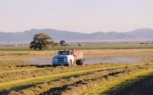 water truck spraying hay